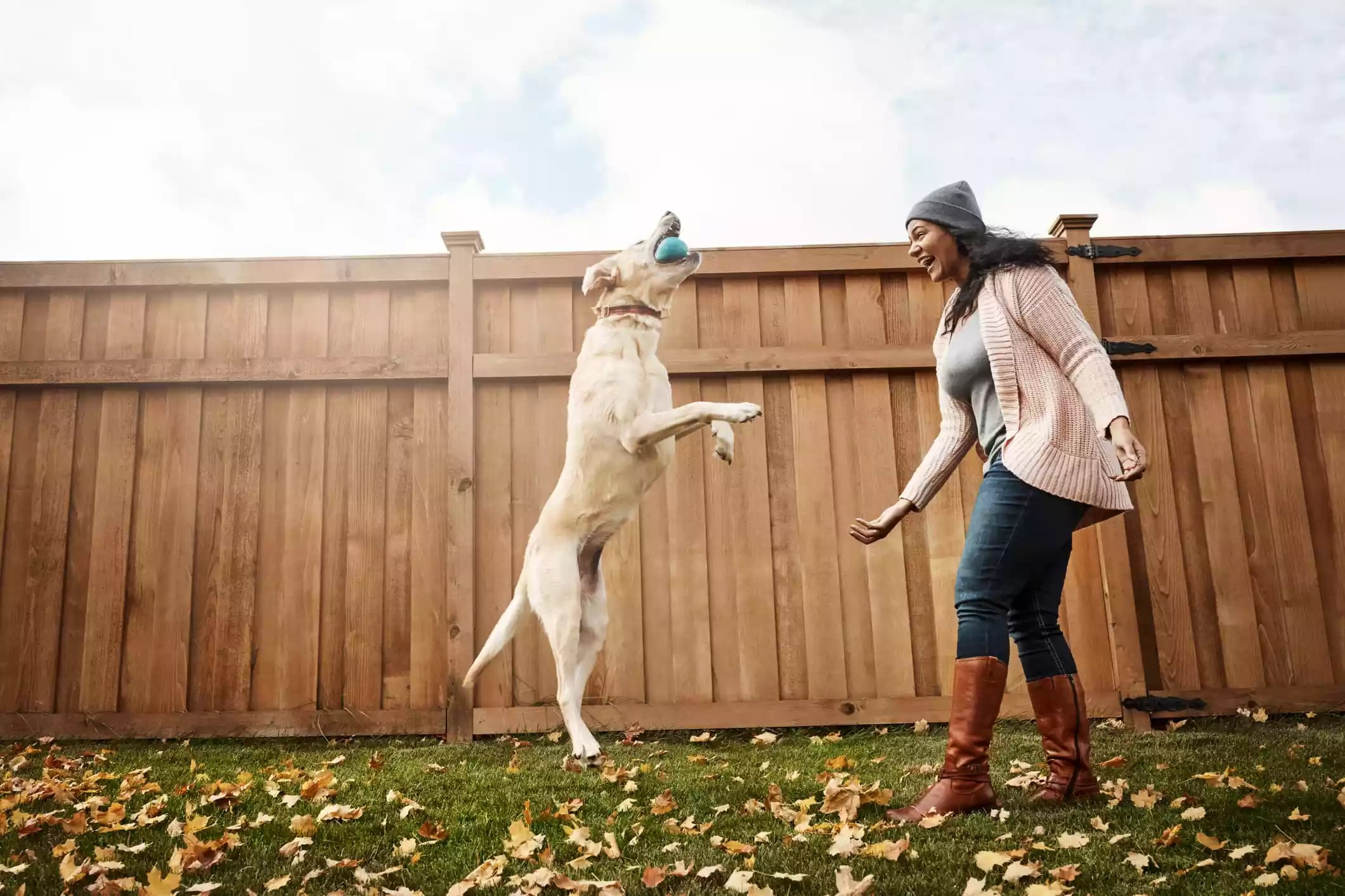 spelletjes met hond
