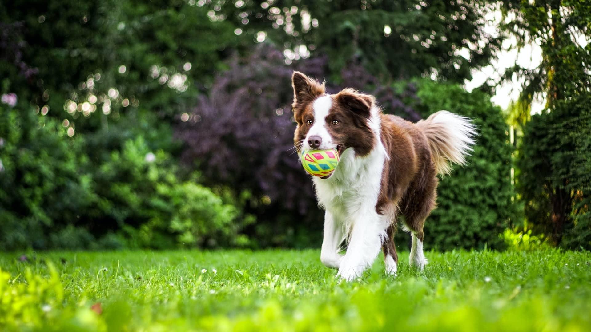 leukste hondenuitjes