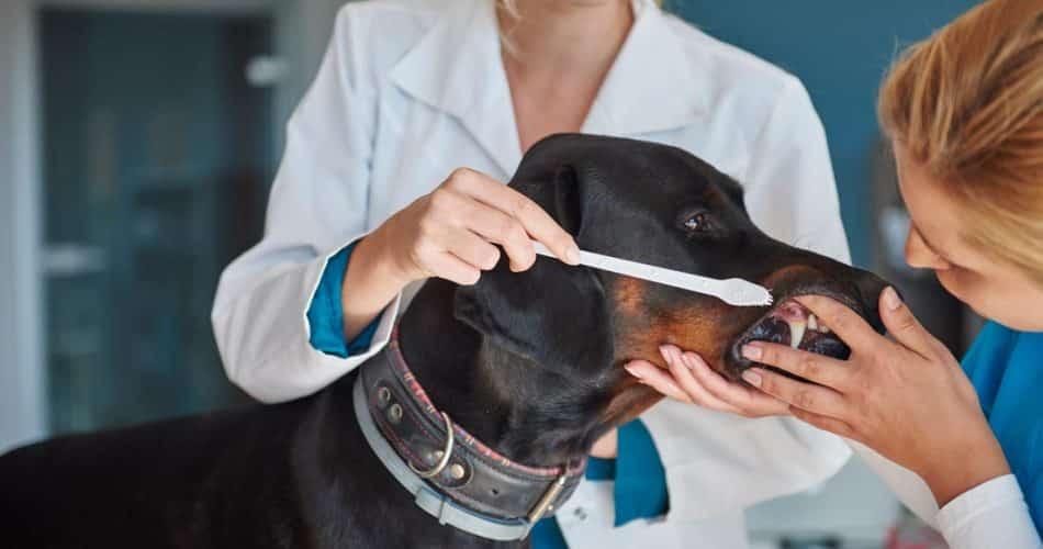 honden gebit verzorgen
