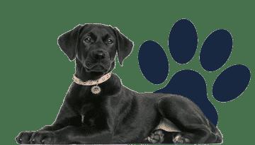 lhic footer honden