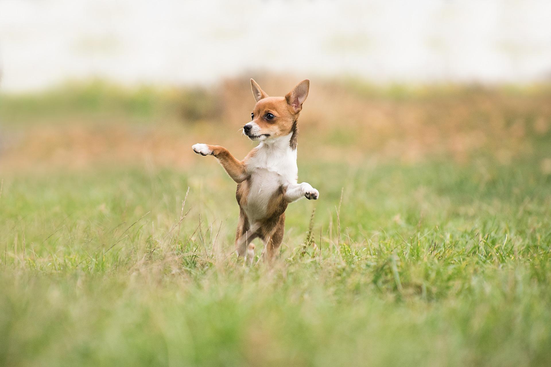 makkelijke honden trucjes