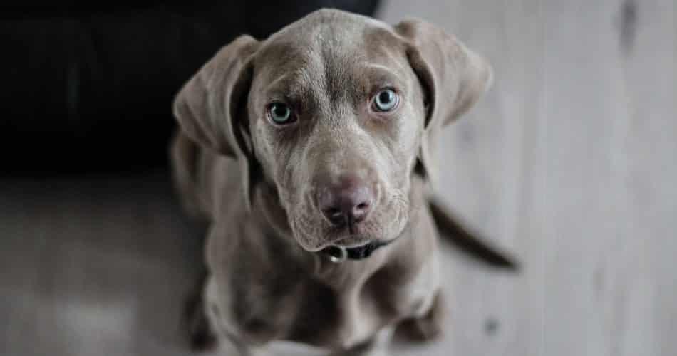 schattigste honden