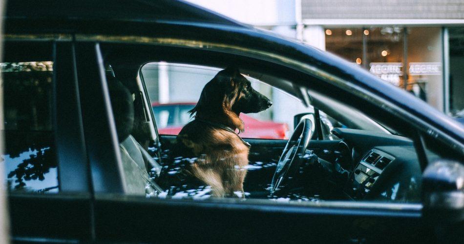 hond in auto warm weer