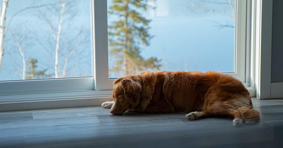 huis hond proof maken