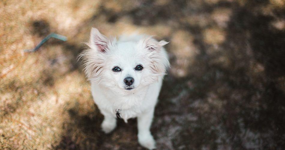 welke honden borstel