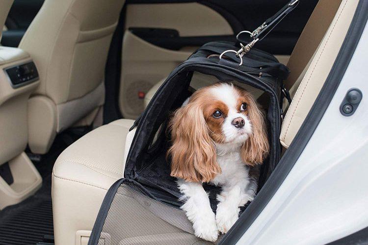 auto hondenbench
