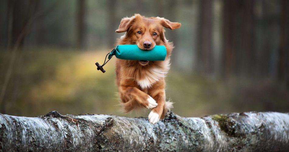 diepgaande kijk op sporthonden
