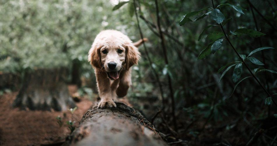 hond op commando laten komen
