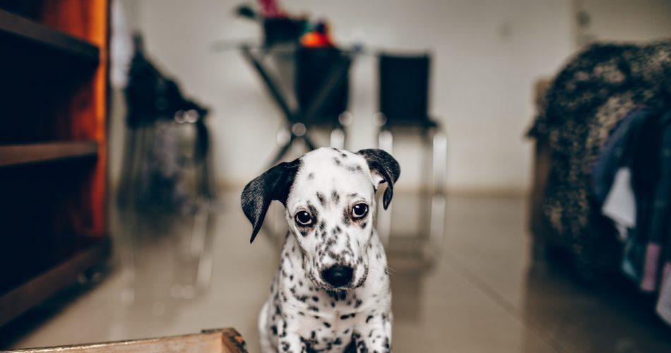 puppy producten