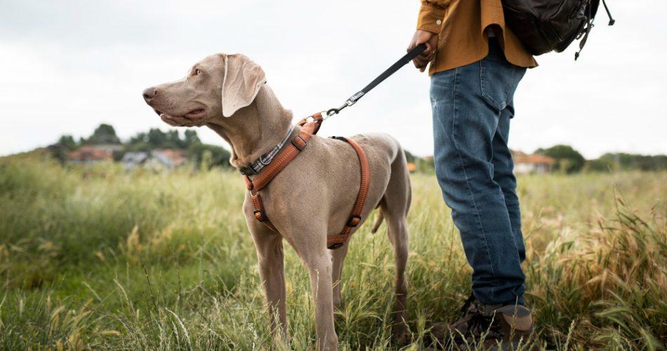 wandelvakantie met hond