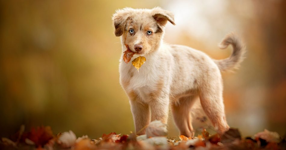 zindelijkheidstraining tips hond