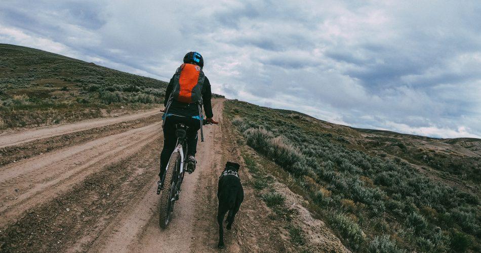 fietsen met hond