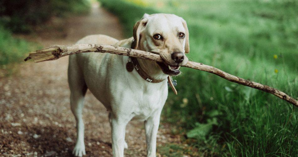 hond eet niet meer
