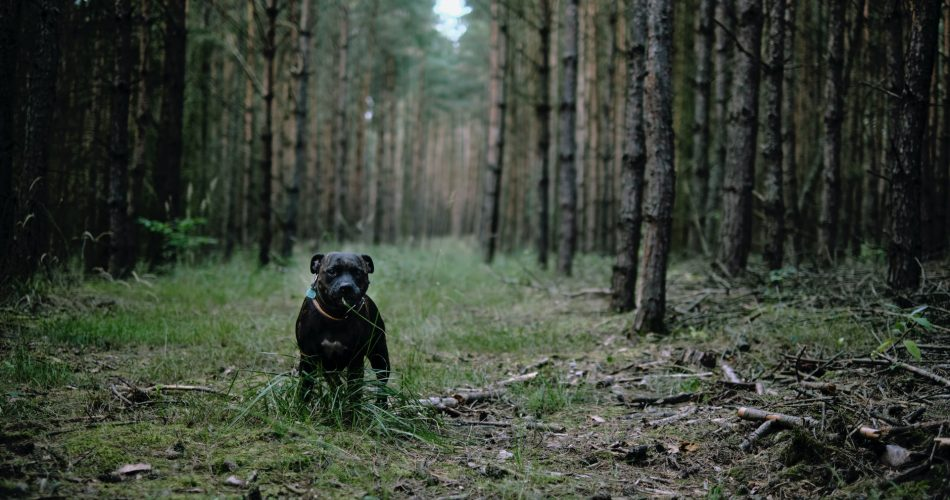hondenverzorging verzekering