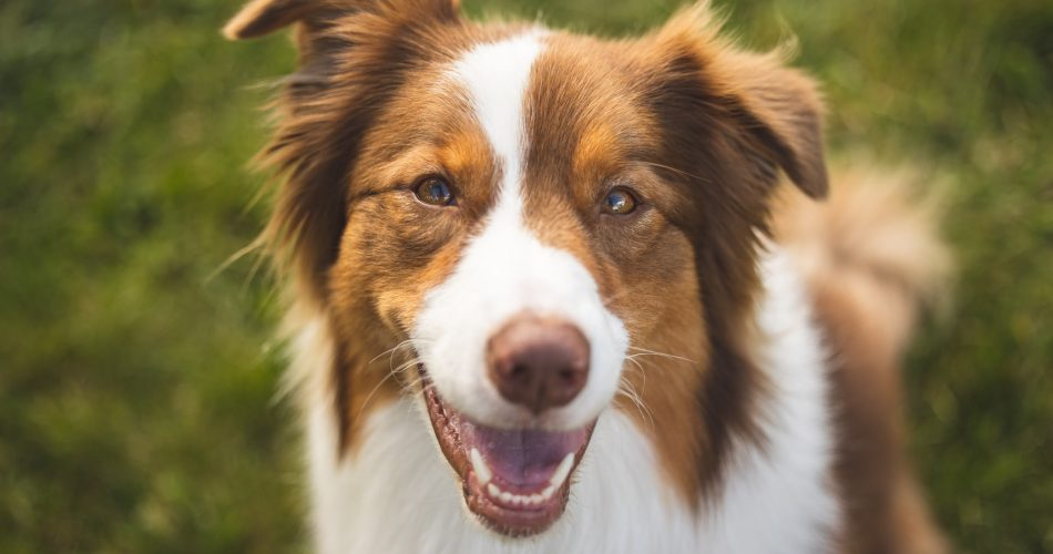 waarom eten honden gras